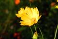 Картинка цветок, цветы, желтый