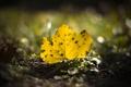 Картинка желтый, лист, опавший, осенний