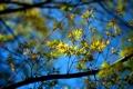Картинка листья, цвета, солнце, свет, природа, ветви, обои