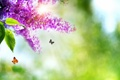 Картинка природа, весна, бабочки, цветы