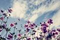 Картинка природа, небо, цветы