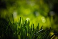 Картинка зелень, трава, макро, боке