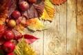 Картинка осень, green, яблоки, доски, зеленые, красные, red