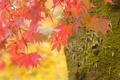 Картинка Макро, Природа, Фото, Дерево, Осень, Листья, Ветки