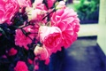 Картинка цветок, розовый, Роза, размытие