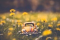 Картинка машина, цветы, природа, фон