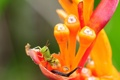 Картинка растение, кузнечик, зеленый, цветок