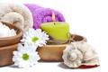 Картинка цветы, ромашки, relax, ракушки, flowers, спа, daisy