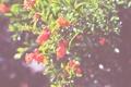 Картинка зелень, цветы, дерево, куст, лепестки