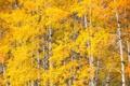 Картинка листья, осень, деревья, осина