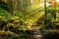Картинка лес, лучи, свет, природа, камни, тропа