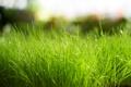 Картинка зелень, трава, макро