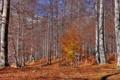 Картинка листья, осень, деревья