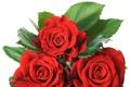 Картинка красные, розы, белый фон, три
