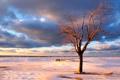 Картинка зима, море, небо, вода, снег, деревья, фото