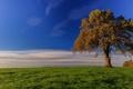 Картинка поле, осень, небо, трава, облака, дерево