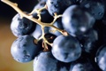 Картинка синий, еда, ягода, виноград, гроздь