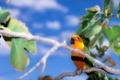 Картинка ветка, попугай, Ендайя