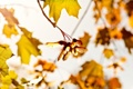 Картинка природа, листья, осень