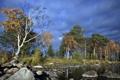 Картинка лето, деревья, пейзаж, природа, река, камни