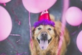 Картинка друг, Happy 7th Birthday, собака