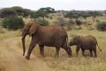 Картинка африка, слоны, слоненок, elephant