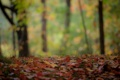 Картинка осень, лес, макро, листва