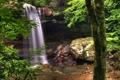 Картинка зелень, вода, деревья, природа, камни, обои, растения