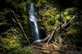 Картинка лес, деревья, камни, скалы, водопад, поток, California