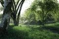 Картинка лес, трава, деревья, заросли, береза