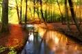 Картинка лес, солнце, деревья, отражение, река, листва