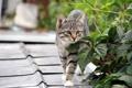 Картинка кошка, листья, фон