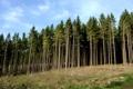 Картинка лес, деревья, стволы, склон, холм, хвойный