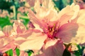 Картинка flower, sakura, spring