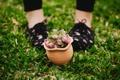 Картинка горшок, розы, трава, цветы