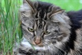 Картинка кошка, трава, макро