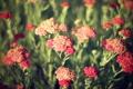 Картинка цветы, обоя, весна