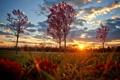 Картинка осень, трава, солнце