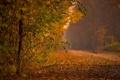 Картинка листья, осень, парк, деревья