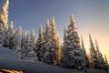 Картинка зима, снег, природа, ели, склон