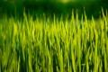 Картинка зелень, лето, трава, солнце, лучи, природа, фон