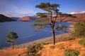 Картинка деревья, природа, озеро, холмы, солнечно