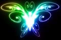 Картинка свет, черный, цвет, Бабочка, яркая