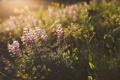 Картинка трава, листья, цветы