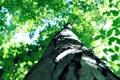 Картинка nature, небо, кора, лето, ствол, зелень, листва