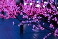 Картинка свет, ветки, дерево, розовый, огоньки, лампочки