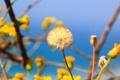 Картинка цветок, небо, одуванчик, растение, ветка