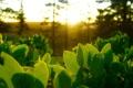 Картинка зелень, свет, листики