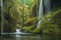 Картинка лес, река, растения, водопад, природа, камни