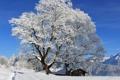 Картинка зима, лес, солнце, снег, деревья, горы, тропинка